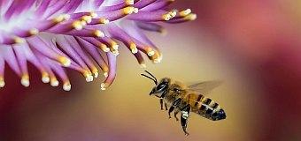 """""""Rola pszczół w przyrodzie""""  – wyniki konkursów"""