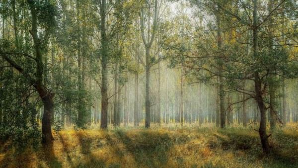 Zdjęcie przedstawia oświetlony słońcem las